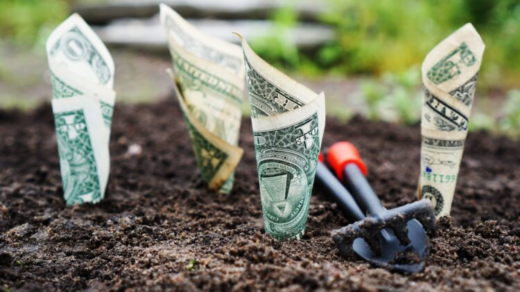 photo of dollar bills planted in the ground